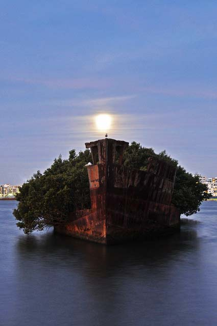 """Ένα """"κατάφυτο"""" πλοίο... χάρμα οφθαλμών!"""