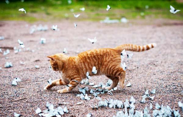 perierga.gr - Η γάτα και οι πεταλούδες...