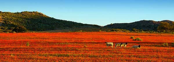perierga.gr - Άνθισαν μαργαρίτες στην έρημο!
