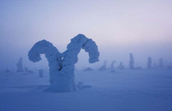 perierga.gr - Τα παγωμένα δέντρα της Αρκτικής!