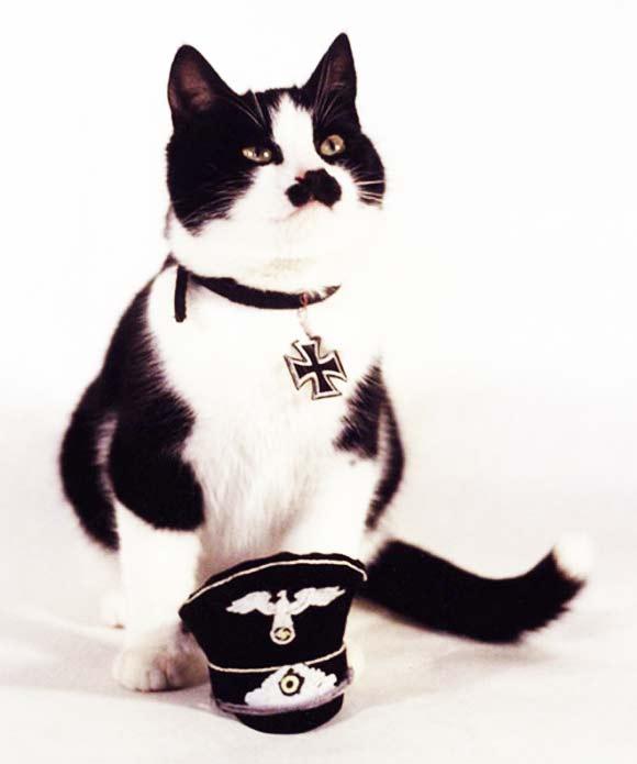 """perierga.gr - """"Hi Kitler"""": Οι γάτες που μοιάζουν με τον Χίτλερ!"""