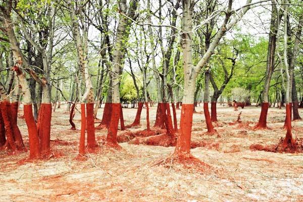 perierga.gr - Ajka: Μια πόλη στο... κόκκινο!