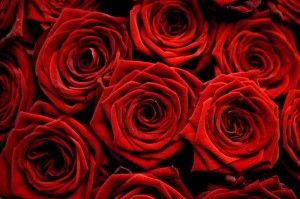 perierga.gr - Του ζήτησε διαζύγιο γιατί δεν της αγόραζε τριαντάφυλλα!