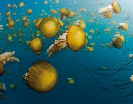 Perierga.gr - Τα πιο παράξενα και εντυπωσιακά ζώα της θάλασσας