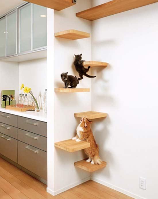 perierga.gr - 10 λόγοι που οι γάτες είναι καλύτερες από τους σκύλους!