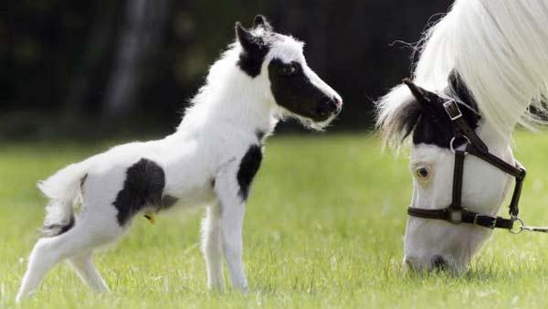 perierga.gr - Ο Αϊνστάιν διεκδικεί τον τίτλο του μικρότερου αλόγου!