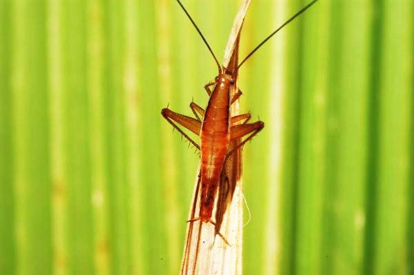 5 έντομα που θα... στοιχειώσουν τους εφιάλτες σας!