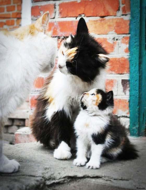 perierga.gr - Ζώα... ολόιδια η μαμά τους!