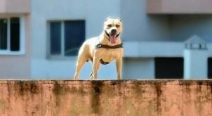 perierga.gr - Σκύλος κάνει... parkour!