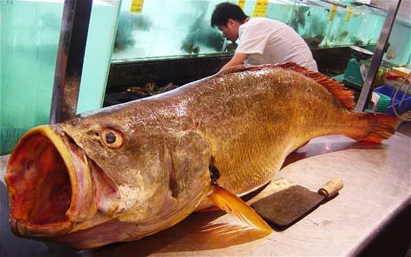 perierga.gr - Ψάρεψε σπάνιο ψάρι αξίας 473.000 δολαρίων!