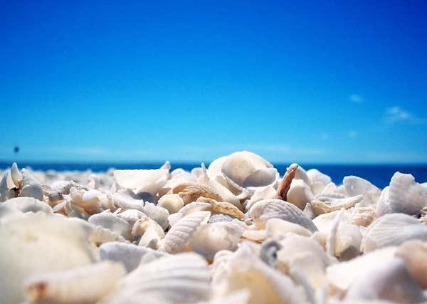 perierga.gr - Σπάνιες παραλίες... κοχυλιών!