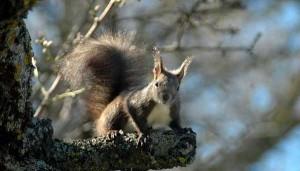 perierga.gr - Η επικίνδυνη αποστολή ενός... σκίουρου!