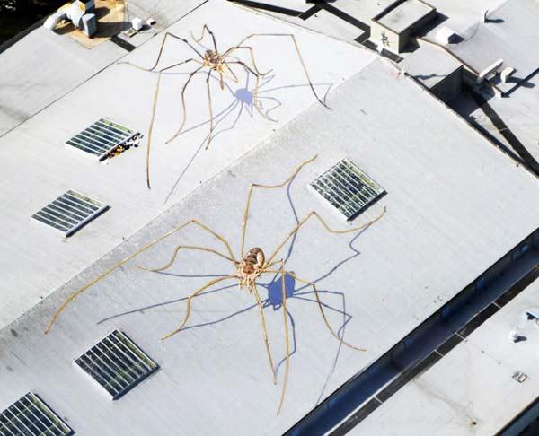 perierga.gr - Αράχνες στην ταράτσα!