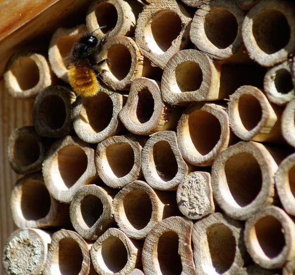 """Καλωσήρθατε στο """"ξενοδοχείο μελισσών""""!"""