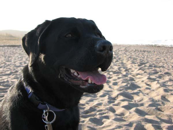 perierga.gr - Σκύλος περπάτησε 800 χλμ. για να γυρίσει σπίτι του!