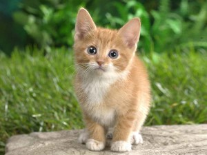 perierga.gr - 9.500 χρόνια πριν ξεκίνησαν οι δεσμοί ανθρώπου-γάτας!