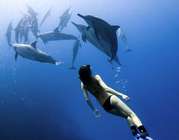 perierga.gr - Κολυμπώντας μαζί με τα δελφίνια!