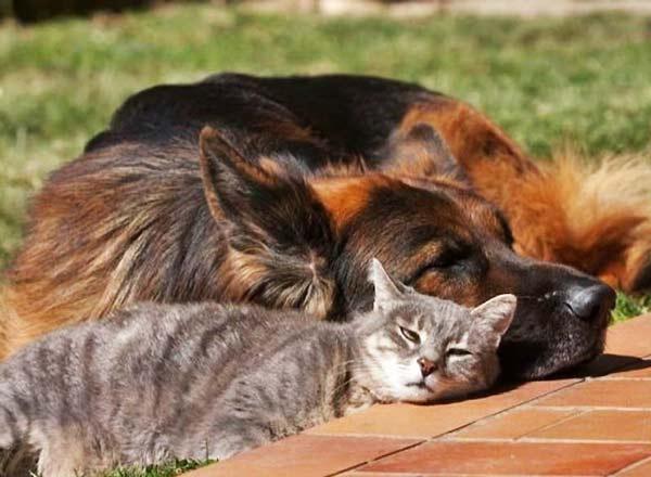 perierga.gr - Σαν το σκύλο με τη γάτα...