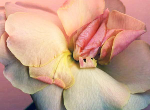 perierga.gr - Φυτά σε σχήμα... γεννητικών οργάνων!