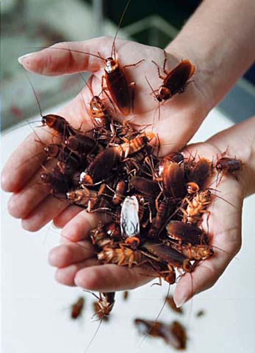 perierga.gr - Cockroach Hall: Μουσείο για... κατσαρίδες!