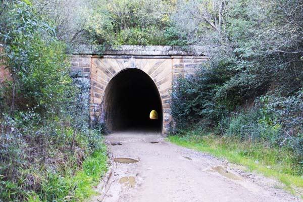 perierga.gr - Εξωτική μανιταρο-φυτεία σε σιδηροδρομικό τούνελ!