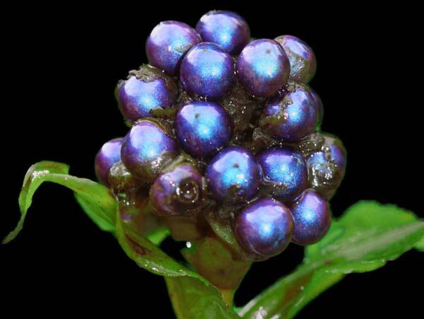 "perierga.gr - Το πιο ""λαμπερό"" φυτό στη φύση!"