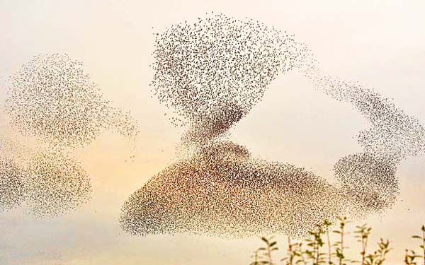 Ο χορός των πτηνών στον αέρα!
