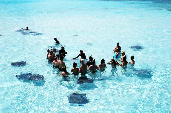 perierga.gr - Κολυμπώντας με τα... σαλάχια!
