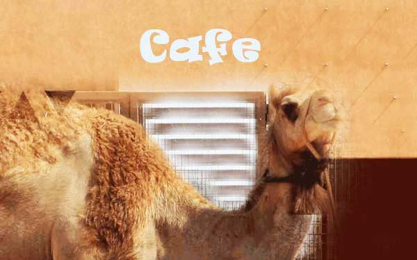 perierga.gr - Ξεχάστε τον καπουτσίνο! Έρχεται ο camel-ccino!