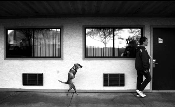 perierga.gr - Μια σκυλίτσα δίνει μάθημα... πίστης!