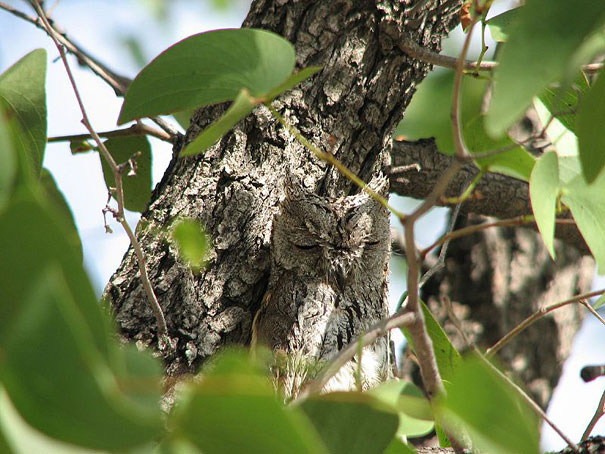 Τεστ παρατηρητικότητας: Βρες την κουκουβάγια!