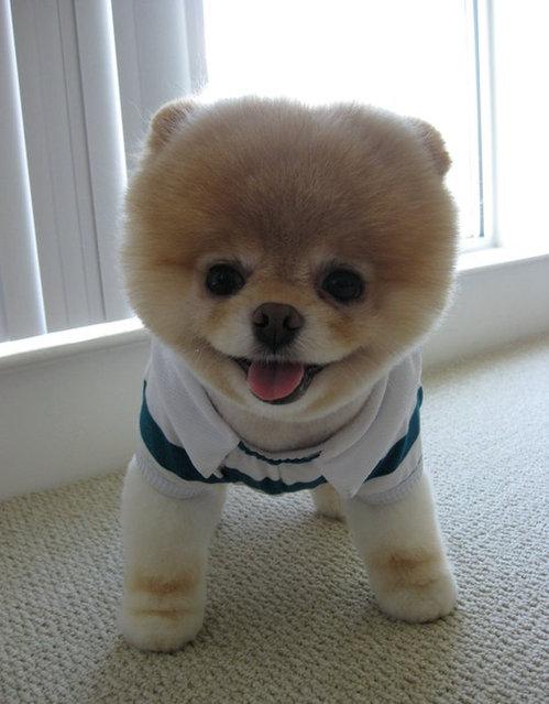 Βοο: Το πιο δημοφιλές σκυλί στον κόσμο σε νέες πόζες!