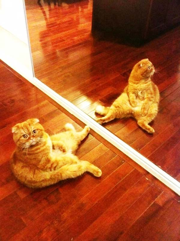 perierga.gr - Σκυλιά & γάτες σε βαθιά... περισυλλογή!