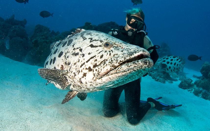 Perierga.gr - Ο μαγικός κόσμος του μεγάλου κοραλλιογενούς υφάλου