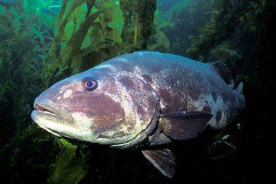 Perierga.gr - Άγνωστα τα 2/3 των θαλάσσιων ειδών!