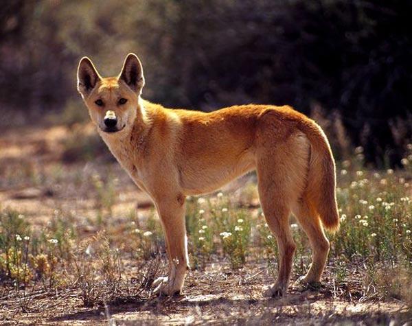 Perierga.gr - Τα πιο... μοχθηρά ζώα του βασιλείου