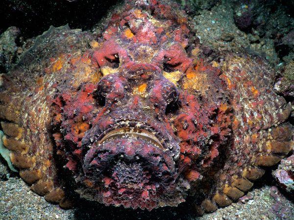 perierga.gr - Σούπερ... δηλητηριώδες ψάρι που μοιάζει με πέτρα!