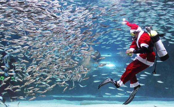 perierga.gr - Ένας... υποβρύχιος Άγιος Βασίλης!