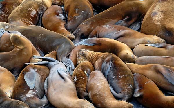 perierga.gr - Ζώα σε τρυφερούς εναγκαλισμούς!