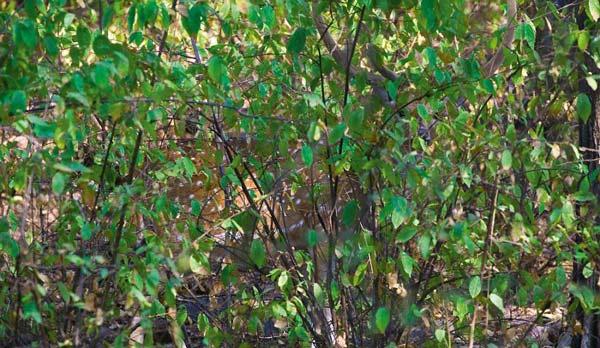 Μπορείτε να βρείτε το... κρυμμένο ζώο;