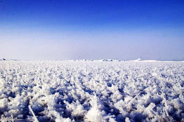 """Εντυπωσιακά """"παγωμένα λουλούδια"""" στον Αρκτικό ωκεανό!"""