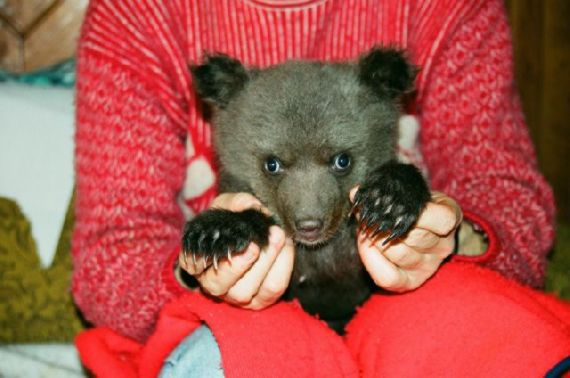 perierga.gr - Γυναίκα μεγαλώνει αρκουδάκι σαν μέλος της οικογένειας!