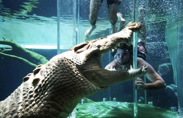 Κολυμπώντας... παρέα με κροκόδειλους!