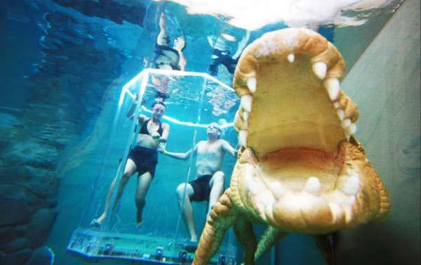 perierga.gr - ΚΚολυμπώντας... παρέα με κροκόδειλους!
