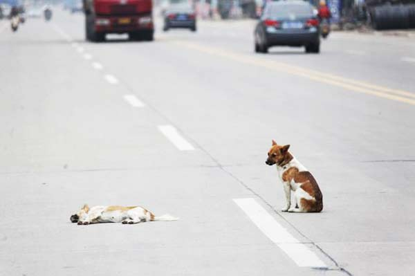 perierga.gr - Θρήνος για το χαμό της στη μέση του δρόμου!