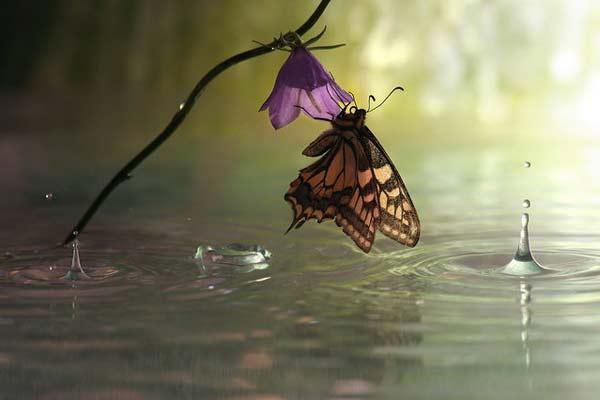 Ένας μαγευτικός μικρόκοσμος... στη βροχή!