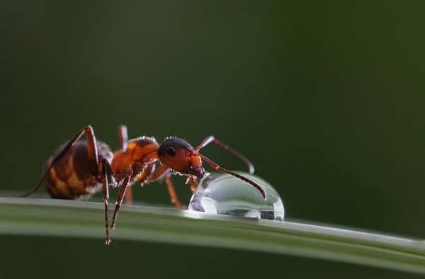Σαλιγκάρια και έντομα ποζάρουν στη βροχή!