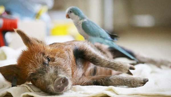 perierga.gr - Παράξενες φιλίες ζώων που ξεχώρισαν το 2012!