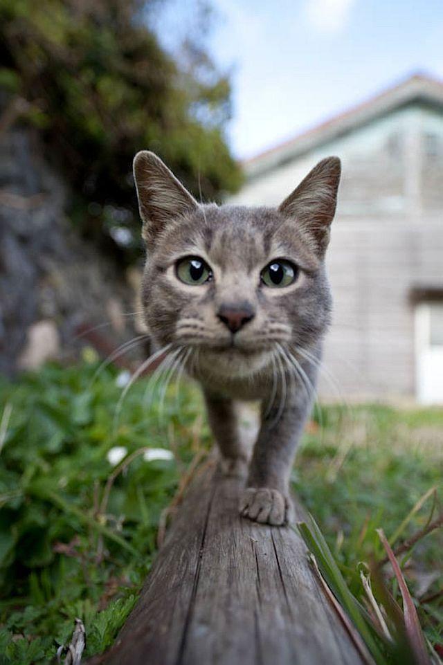Perierga.gr - Αυτό θα πει... γατίσια ζωή