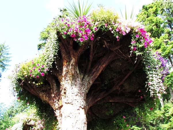 Τα ανάποδα δέντρα είναι γνωστά ως «towers